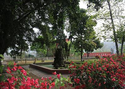 校園中的大榕樹